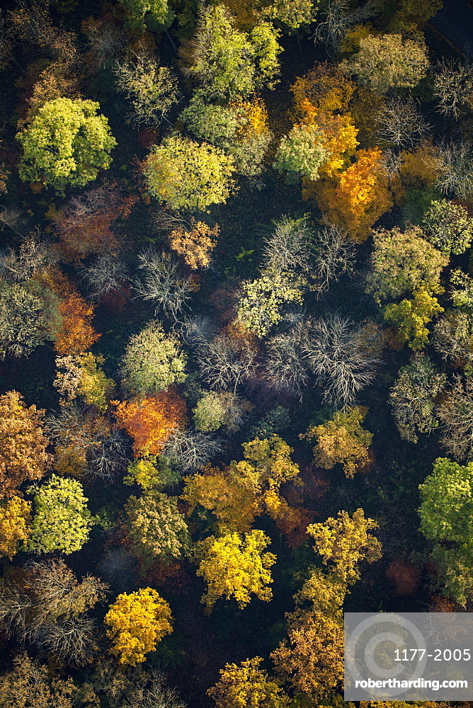 View from above autumn treetops