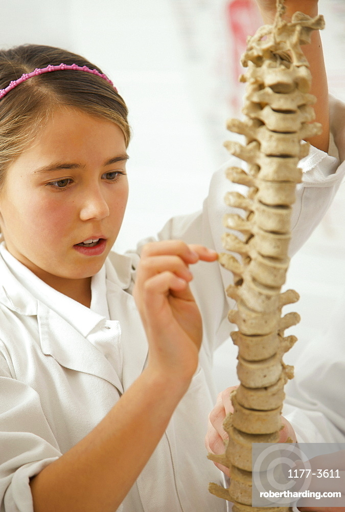 Curious junior high school girl examining spine model in science class
