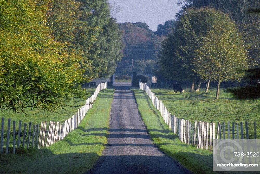 Fence on both sides of a road, Carnally House, Clare Castle, County Clare, Republic of Ireland