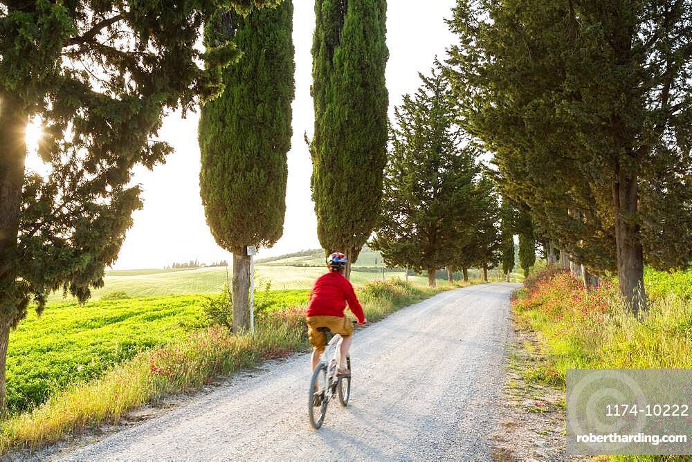 Cyclist on a tree lined dirt road at sunset, Tuscany, Italy