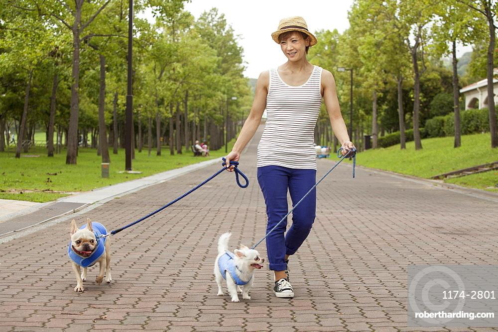 Woman walking two dogs on a paved path, Kyoto, Honshu Island, Japan