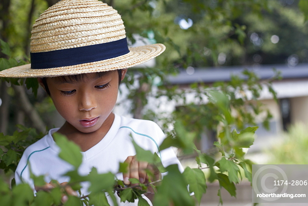 Young boy wearing a straw hat, looking at a tree branch, Kyoto, Honshu Island, Japan