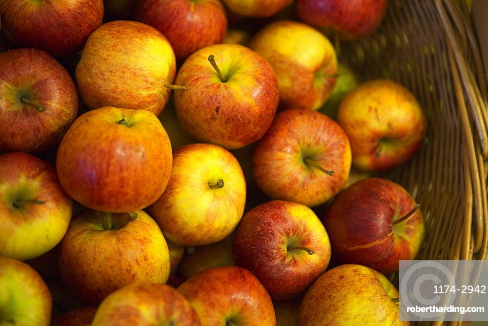Basket of apples, Wiltshire, England