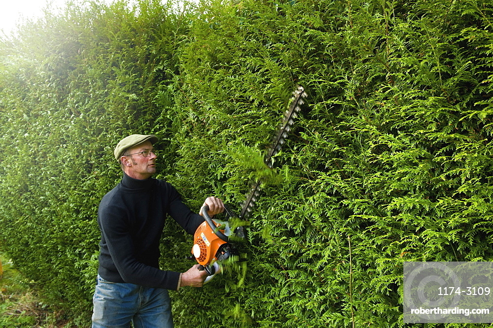 A man trimming a tall hedge with a motorized hedge trimmerHedge trimming, Gloucestershire, England
