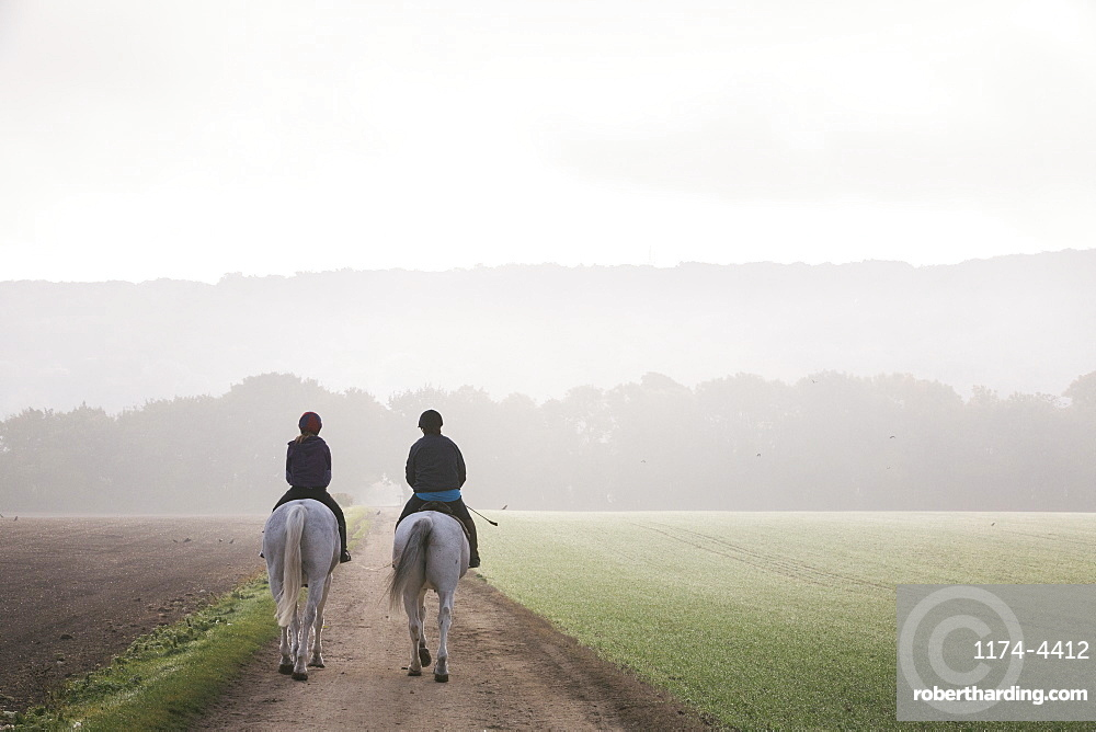 Rear view of two riders on grey horses riding along a path through a field.