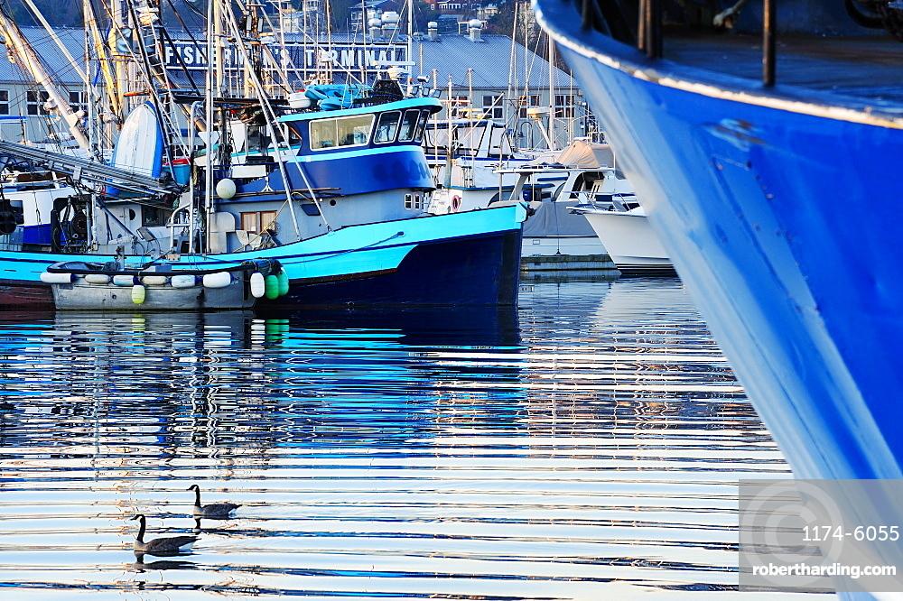 Ducks swimming in urban harbor