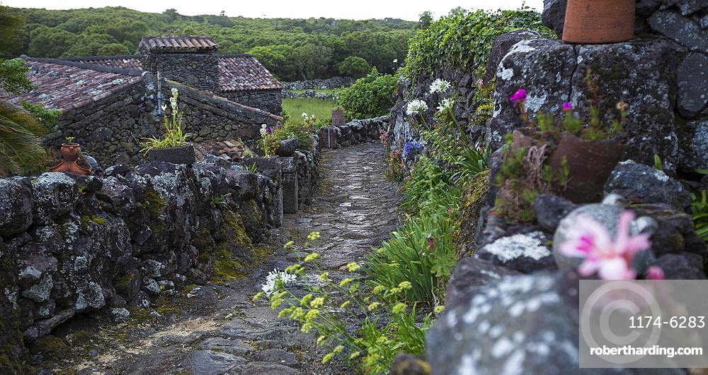 Cobblestone walkway in rural village, Cuada Village, Flores, Portugal
