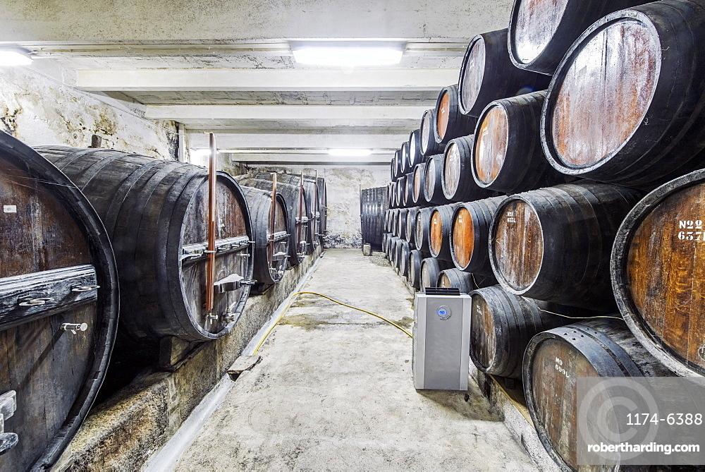 Barrels of wine aging in wine cellar, Peso da Regua, Vila Real, Portugal