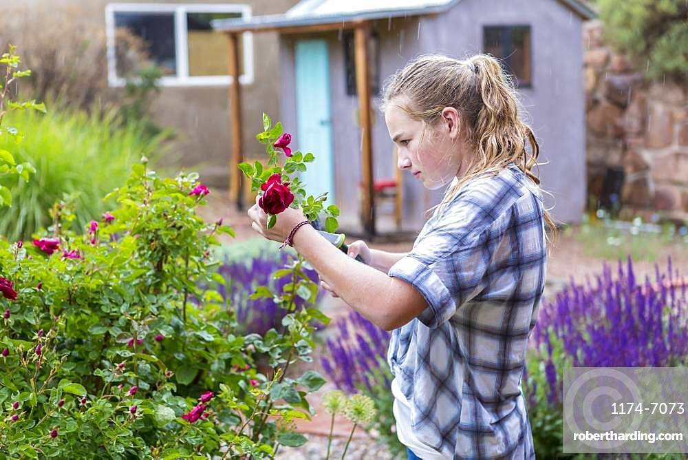 A teenage girl cutting roses from formal garden