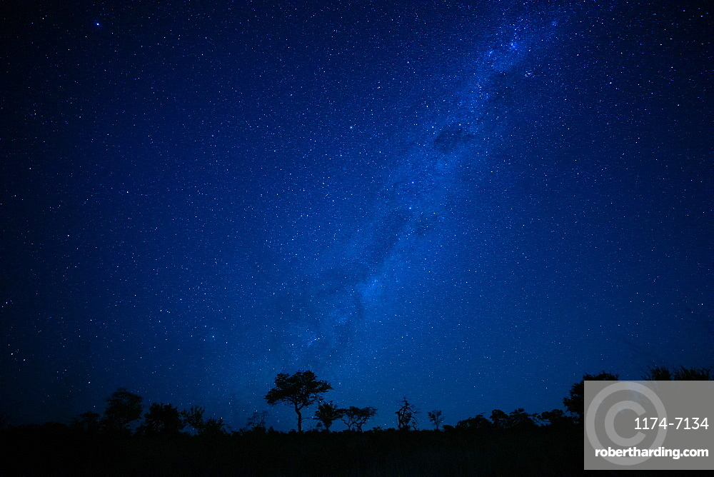 A landscape shot at night, silhouetted trees in the foreground and the Milky Way and stars in the background, Londolozi Game Reserve, Sabi Sands, Greater Kruger National Park, South Africa