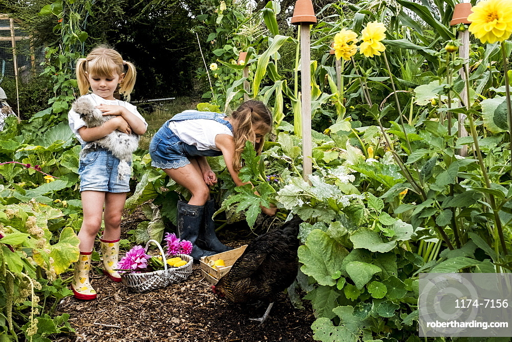 Two girls standing in a garden, holding chicken and picking vegetables