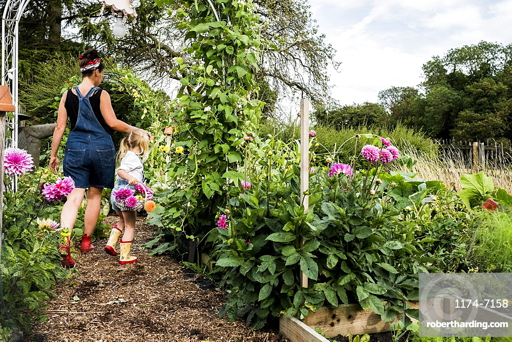 Girl and woman walking through a garden, carrying baskets with pink Dahlias