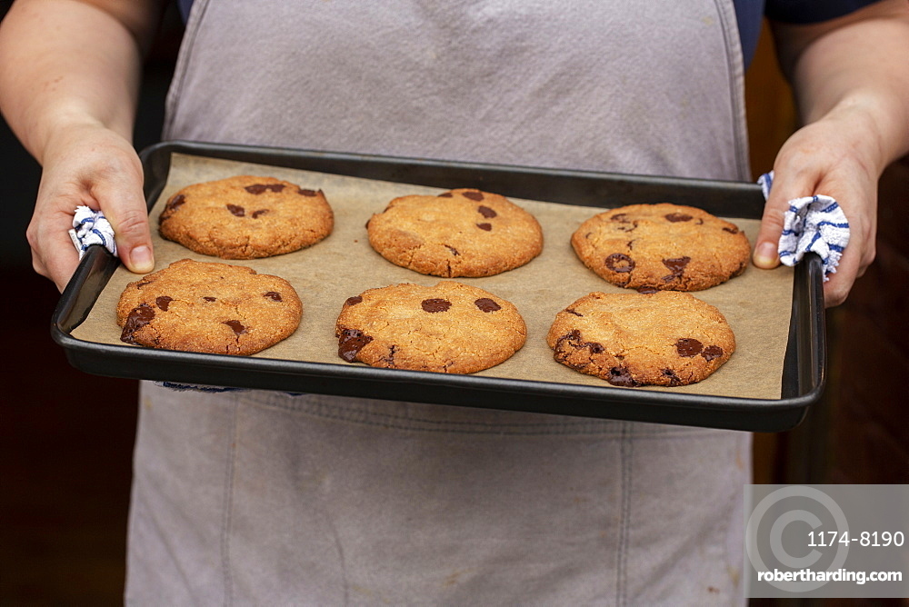 Close up of person holding baking tray with freshly baked chocolate chip cookies