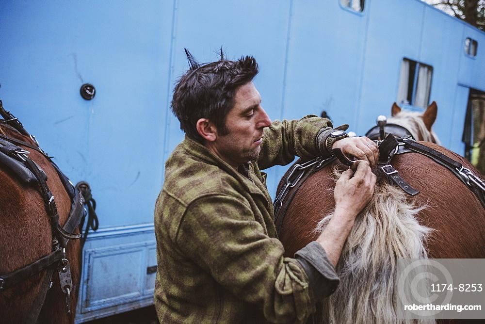 Logger fastening crupper on one of his work horses, Devon, United Kingdom