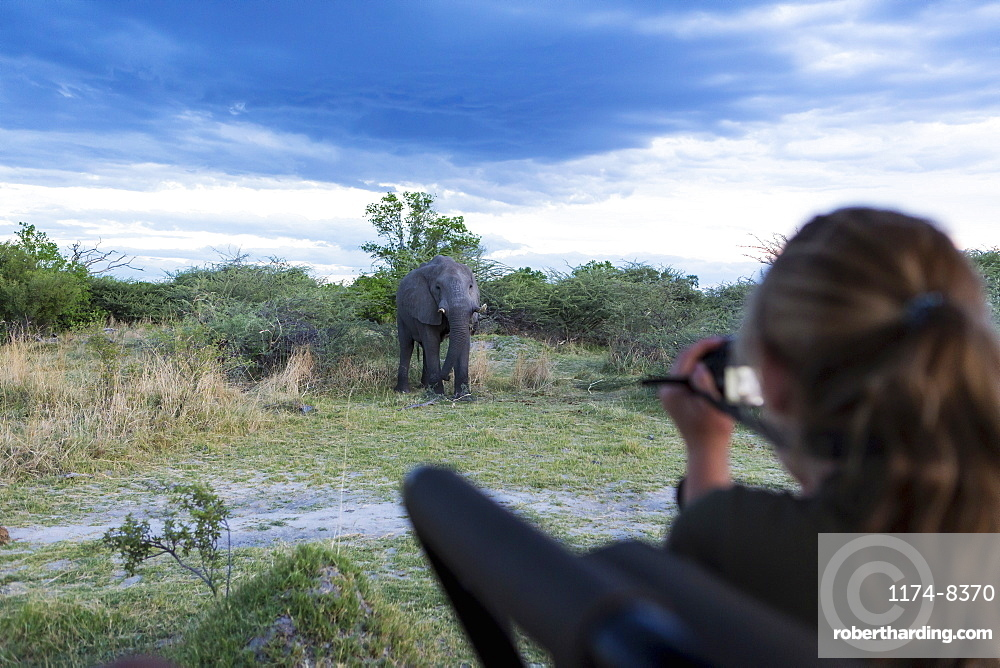 A teenage girl using a camera taking pictures of a mature elephant with tusks approaching, Moremi Game Reserve, Botswana