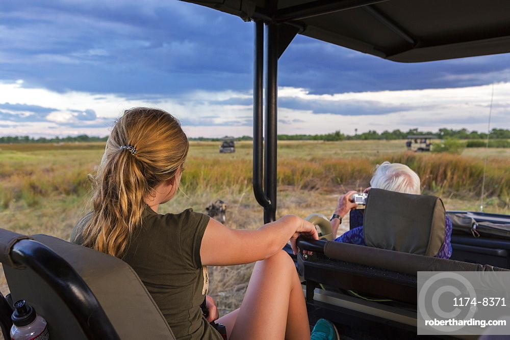 A teenage girl and senior man seated in a safari jeep observing a pack of wild dogs, Moremi Game Reserve, Botswana