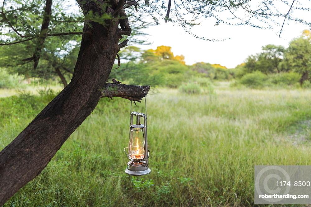 lantern hanging on tree branch, Maun, Botswana
