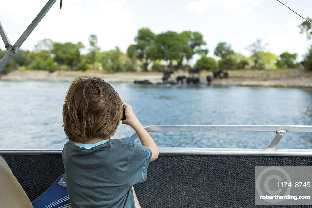 Rear view of 5 year old boy taking pictures of elephants at waters edge on the Zambezi River, Okavango Delta, Botswana