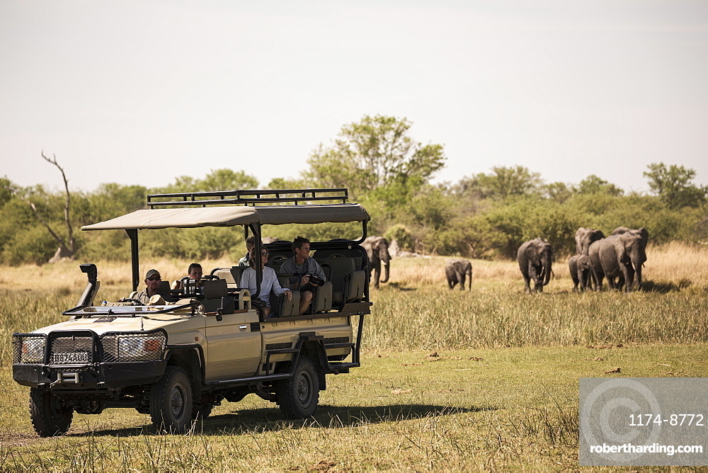 A jeep with passengers observing elephants gathering at water hole