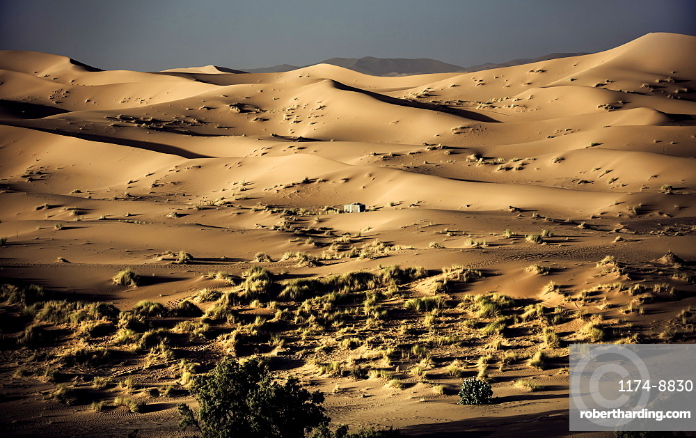 Desert landscape with few shrubs and sand dunes, Morocco