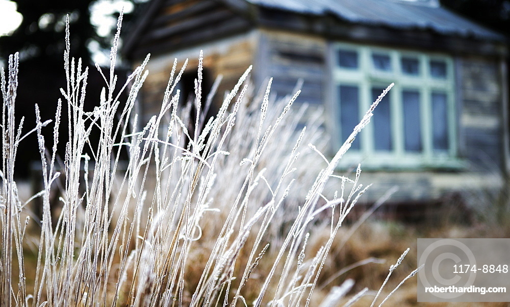 Close up of grass, building exterior in the background