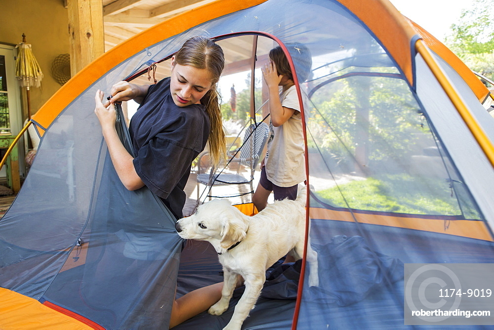 Teenage girl and her younger brother setting up a tent, a cute puppy tugging the tent fabric, New Mexico, United States