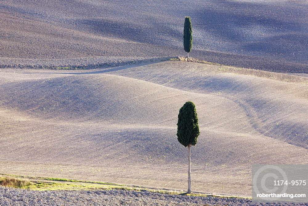 Trees in rural farming landscape