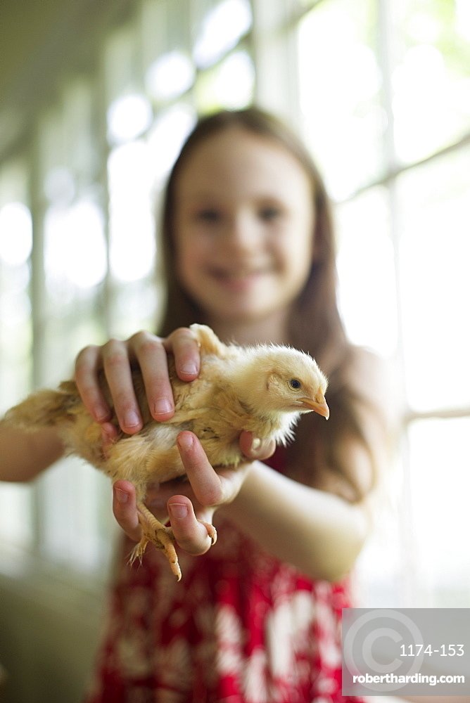 A young girl in a floral sundress, holding a young chick carefully in her hands.
