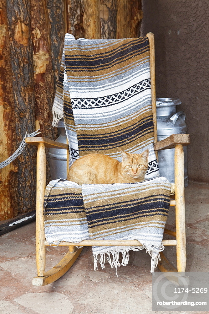 Cat on a Wooden Rocking Chair, Entrada, Colorado, United States of America