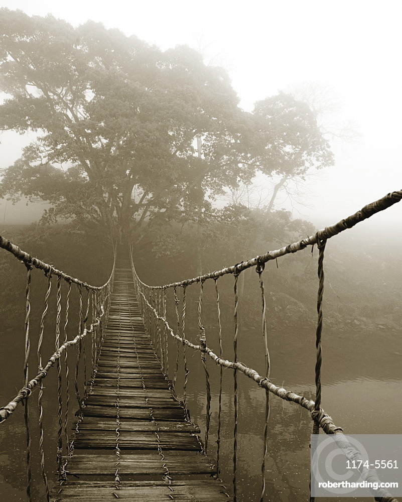 Fog surrounding trees and footbridge, Sapa, Vietnam
