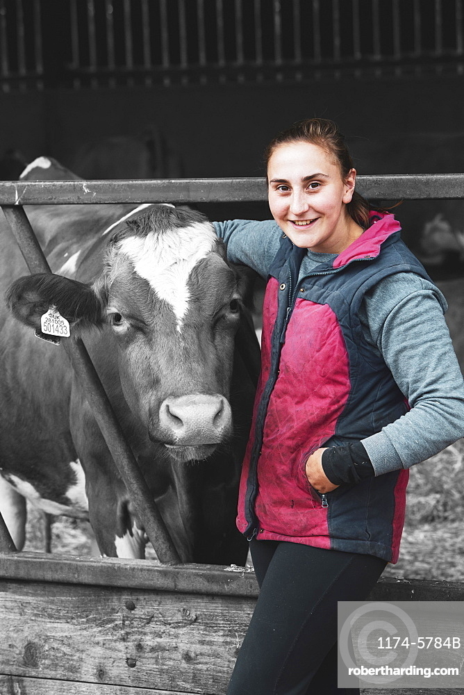 Young woman standing next to Guernsey cow on a farm, Oxfordshire, England