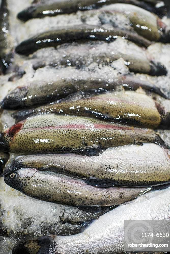 Fresh caught fish for sale on a fish market stall