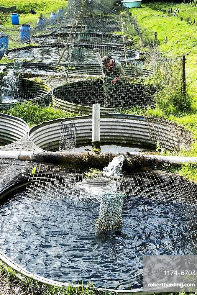 High angle view of man wearing waders working at a water tank at a fish farm raising trout