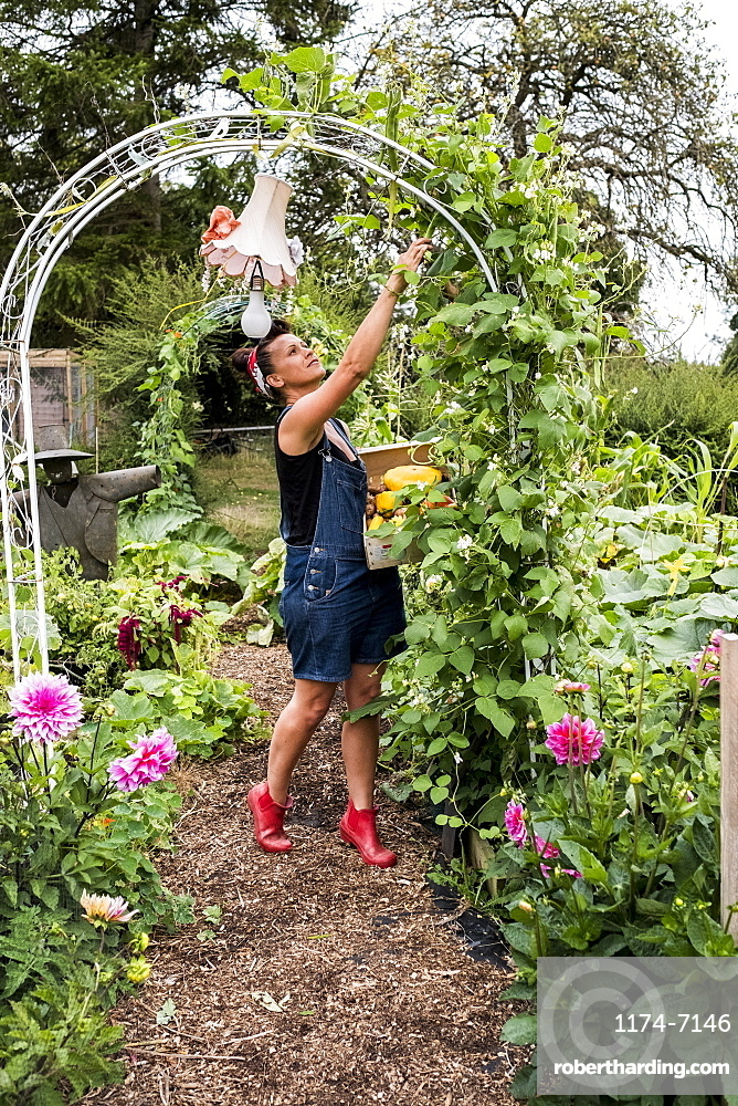 Woman standing underneath arch in a garden, picking green beans