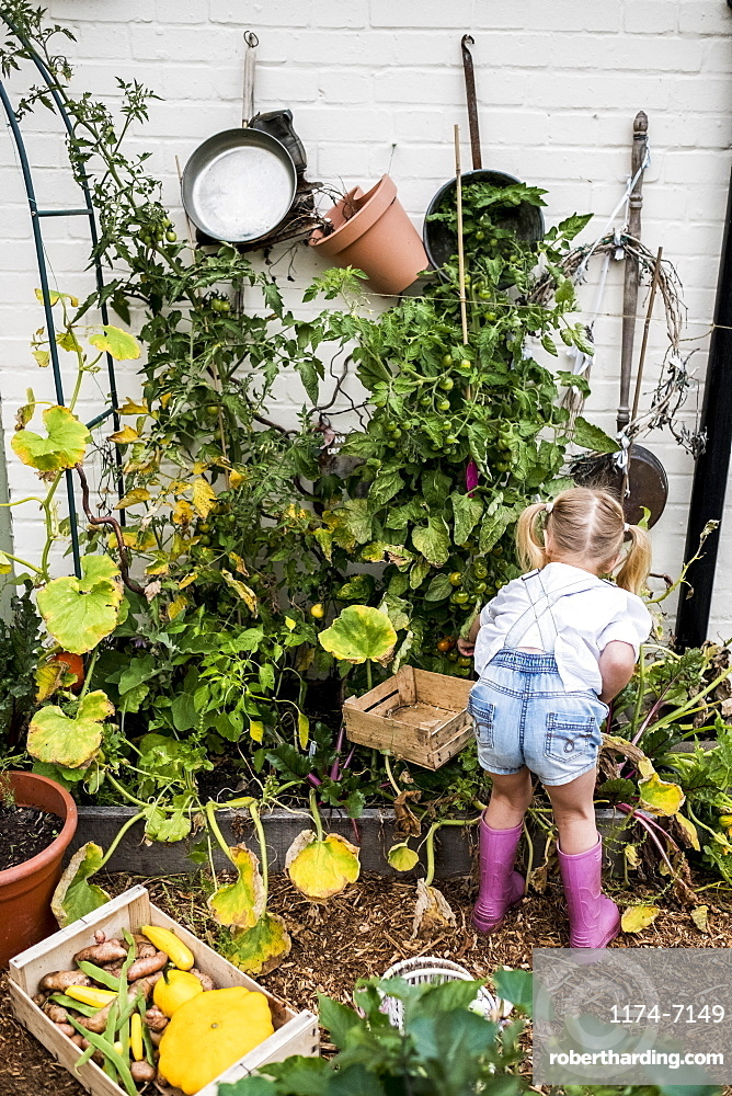 Rear view of blond girl standing in a garden, picking fresh vegetables