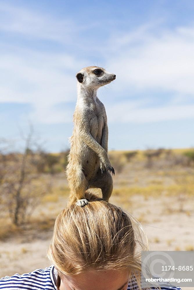12 year old girl with Meerkat on her head, Kalahari Desert, Makgadikgadi Salt Pans, Botswana