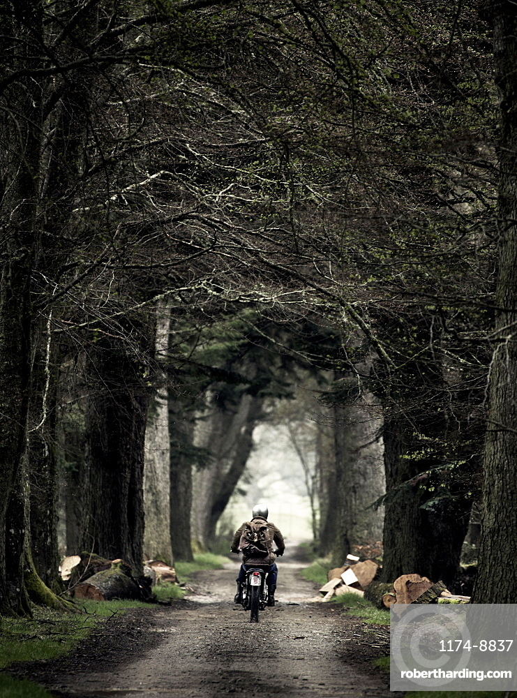 Rear view of man on motorcycle driving along a tree lined country road