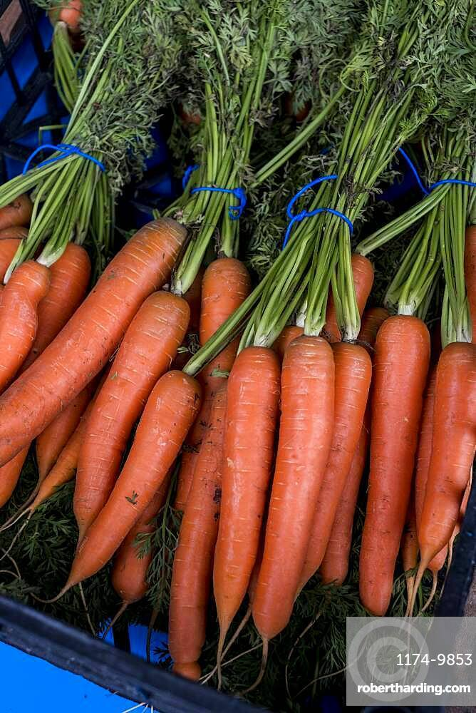 High angle close up of bunch of freshly picked carrots, Oxfordshire, United Kingdom