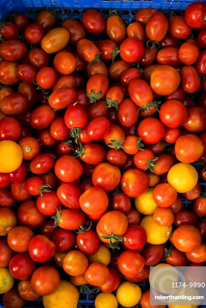 High angle close up of freshly picked cherry tomatoes, Oxfordshire, United Kingdom