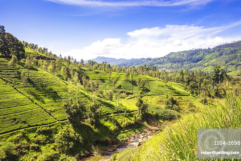 Sri Lanka, Hatton, Castlereagh Lake, Tea Estate