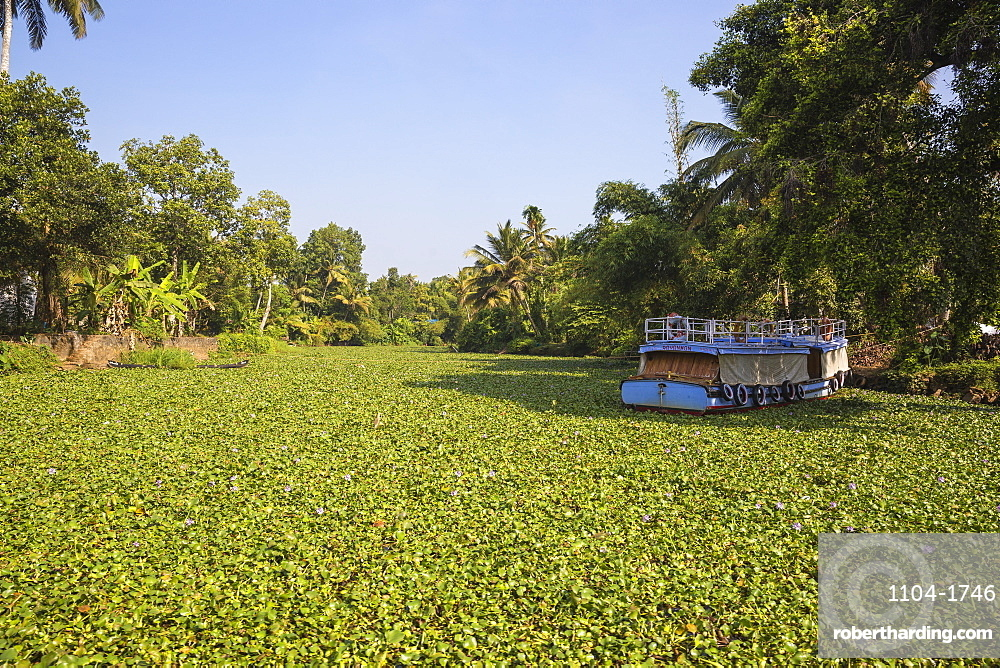 India, Kerala, Alappuzha (Alleppey), Alappuzha (Alleppey) backwaters,