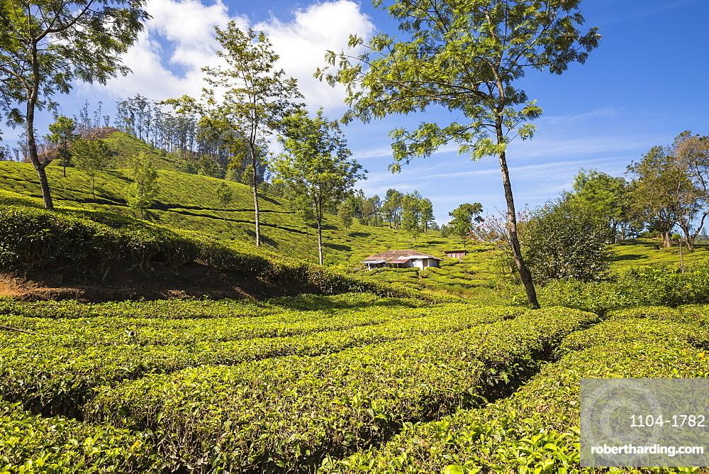 India, Kerala, Munnar, Workers cottage on Tea Estate