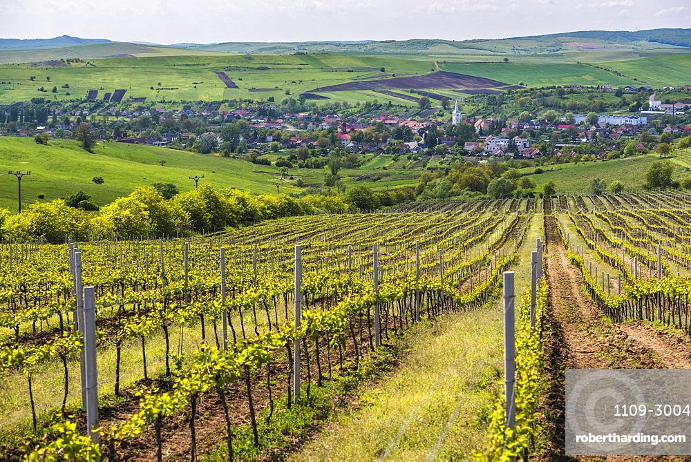 Vineyard landscape in Transylvania, near Brasov, Romania, Europe