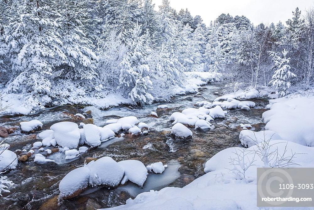Snowy landscape at CairnGorm Mountain, Cairngorms National Park, Scotland, United Kingdom, Europe