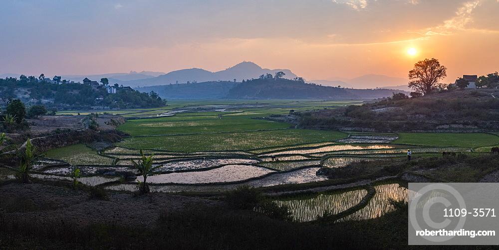 Rice paddy fields landscape at sunset, near Ranomafana, Haute Matsiatra Region, Madagascar, Africa