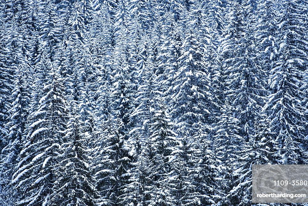 Snowy forest winter landscape, Avoriaz, Port du Soleil, Auvergne Rhone Alpes, French Alps, France, Europe