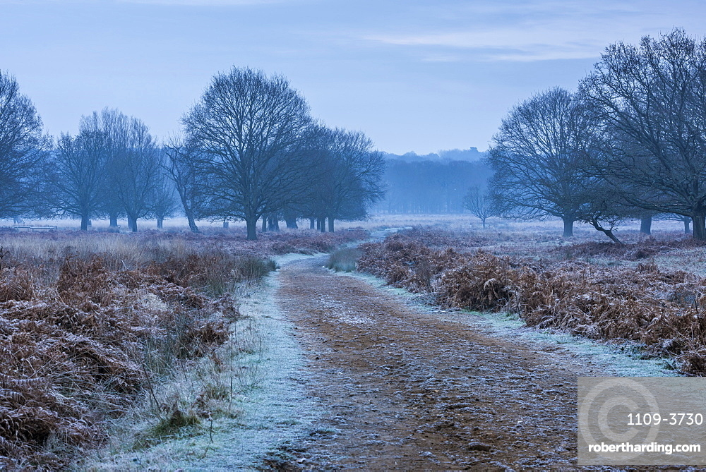 Richmond Park on a frosty morning, Richmond, London, England, United Kingdom, Europe
