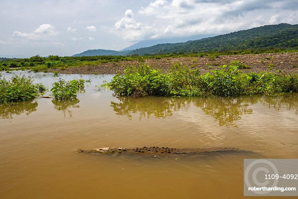 American Crocodile (Crocodylus acutus), Tarcoles River, Carara National Park, Puntarenas Province, Costa Rica