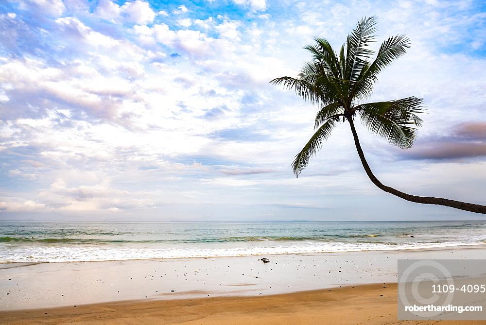 Palm tree at sunrise on Punta Leona Beach, Puntarenas Province, Pacific Coast of Costa Rica, Central America