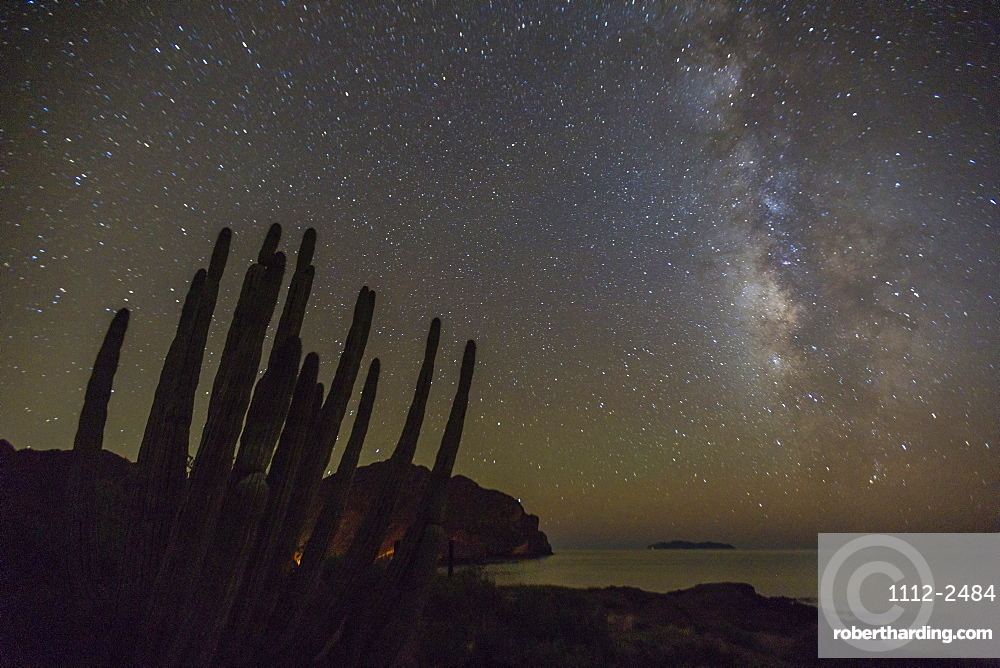 Night view of the Milky Way with organ pipe cactus (Stenocereus thurberi) in foreground, Himalaya Beach, Sonora, Mexico, North America